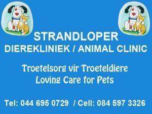 Veterinarian in Hartenbos available during Lockdown